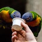 Глезете папагалите с мярка