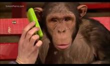 Маймуни реагират на фокуси