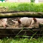 За 2020 г. повече ветеринарни лекари, предвижда реформата на БАБХ