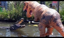 Мъж облечен като тиранозавър дразни крокодил