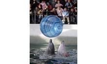 Делфините - умни като хората, но малко по-добри