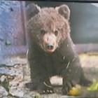 9-годишен мечок с нов дом