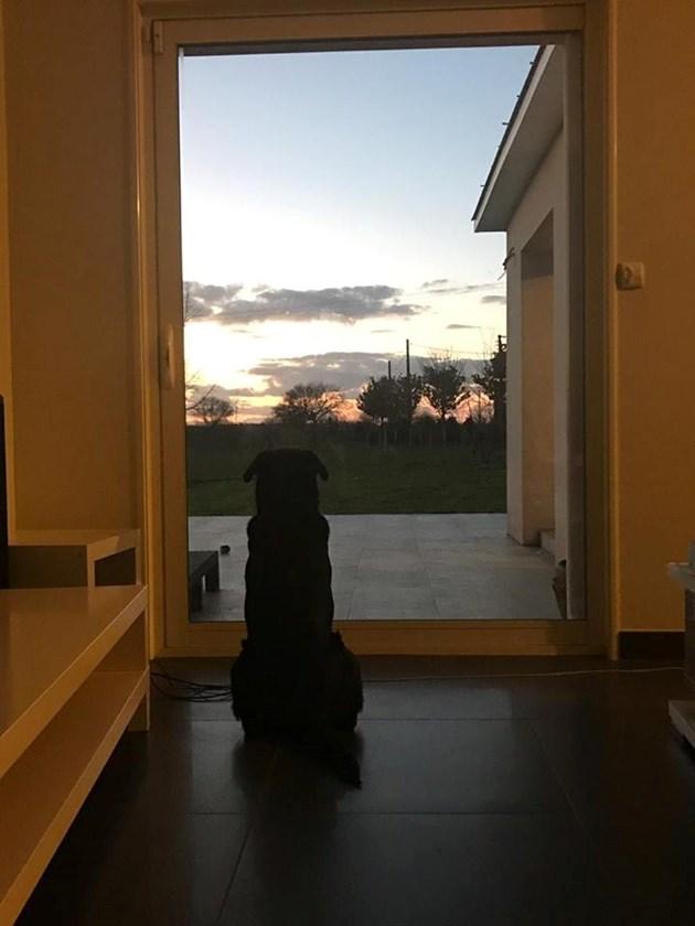 Кучето на Сала продължава да го чака
