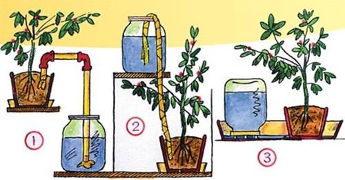 Как да поливаме цветята, когато ни няма