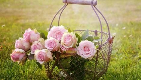 Сега е най-подходящо да се садят рози