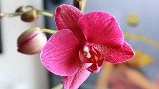 Полезни съвети за отглеждане на различни видове орхидеи