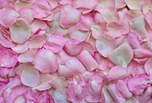 Венчелистчетата на розите
