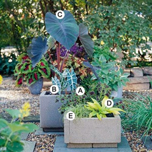Идеи за градински контейнери в сенчести градини