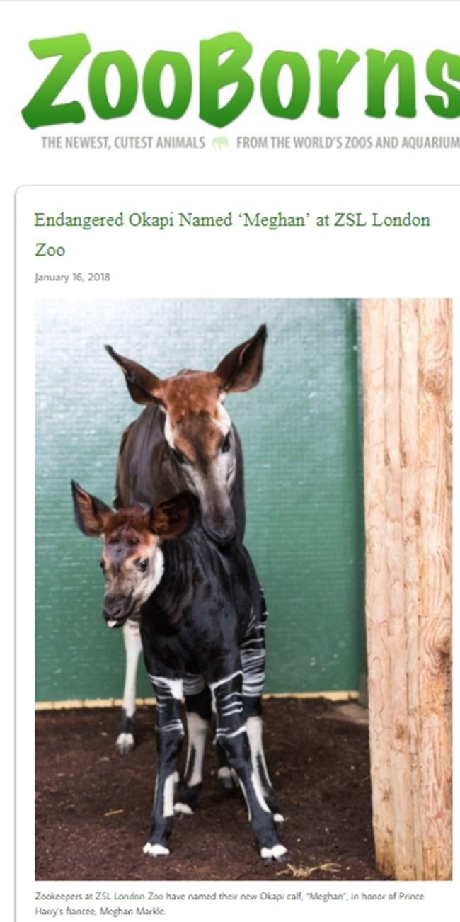 Факсимиле: zooborns.com