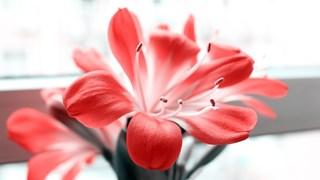Подходящи цветя за пушачи