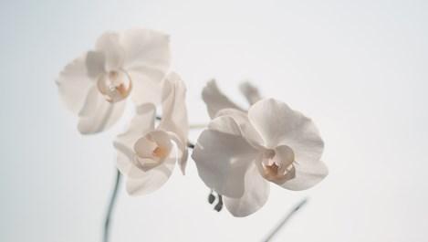Канелата предпазва орхидеите от гниене