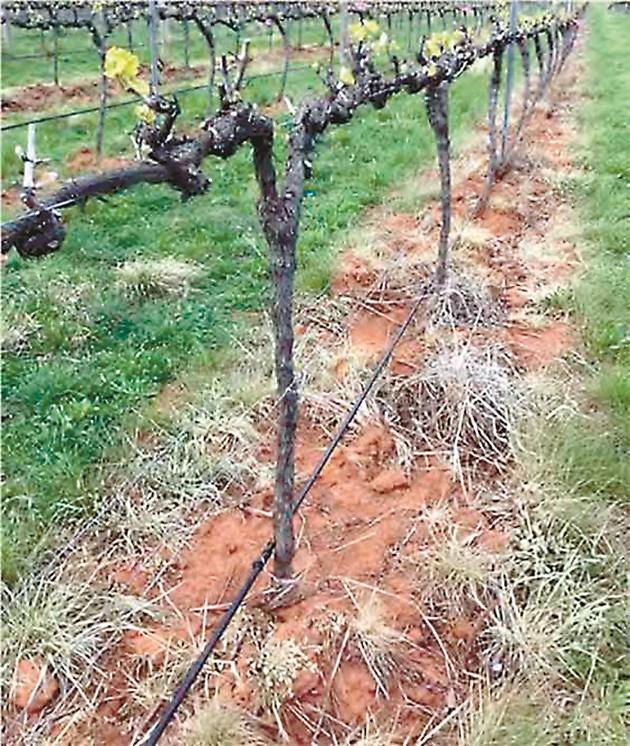 Плевелите могат да се наситнят и да послужат за компост