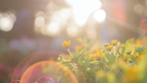 Слънце в Близнаци – покажете се
