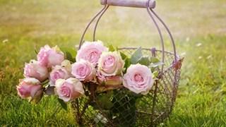 Как да поливаме правилно розите