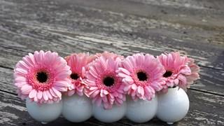 Растенията, които пречистват въздуха у дома