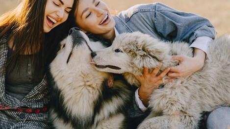 Да вземем ли куче на тийнейджъра?