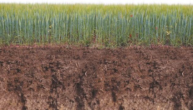 Опазването на почвата и културите е решаващо за получаване на чиста растителна продукция