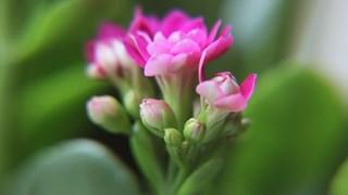 Растения, които чистят въздуха вкъщи