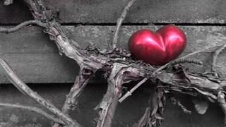 Разкриха тайната на щастието в любовта