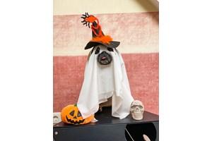 Честит Хелуин от кучето инфлуенсър (Снимки)