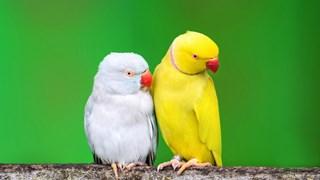 Храни, забранени за папагали