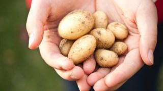 Картофите – подценяваните помощници на красотата и здравето