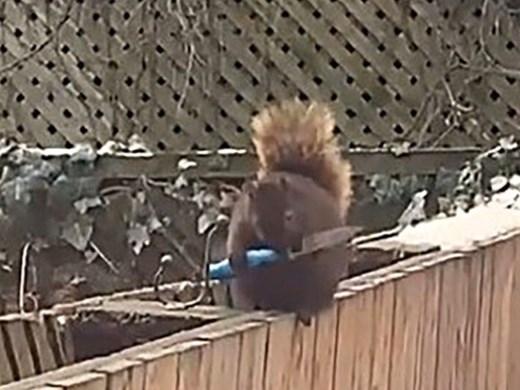 Канадка засне катерица с нож в двора си (Видео)