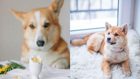 Безопасно ли е кучето да яде яйца