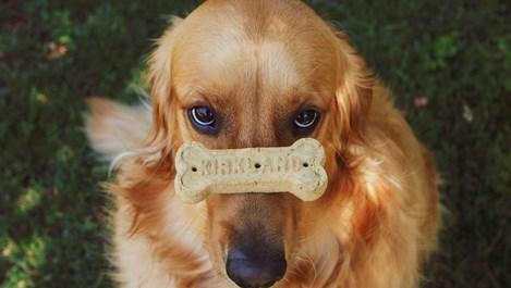 Домашно приготвени лакомства за кучето, които стават и за вас
