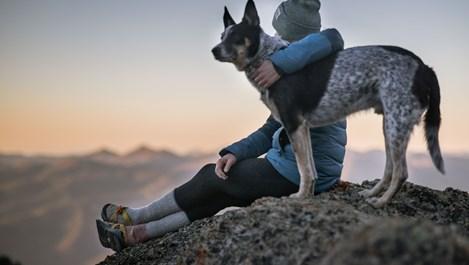 Възможни ефекти от поглъщането на камъни при кучетата