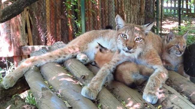 СНИМКА И ВИДЕО: Софийския зоопарк