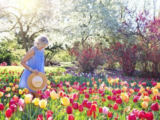 Цветя, подходящи за градината
