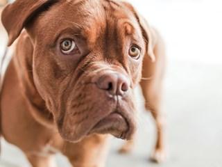 Как да намалим падането на кучешката козина