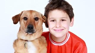 Как да спрем кучешката агресия и да заживеем по-спокойно с четириногите