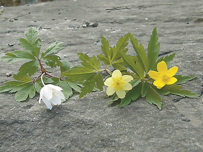 Снимка: Wikimedia.org