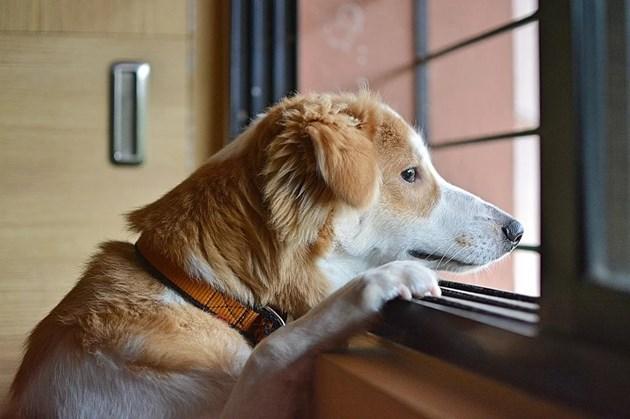 Понякога апатията на кучето е сигнал за здравословен проблем