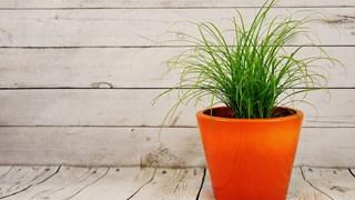 Внимателно с растенията в детската стая