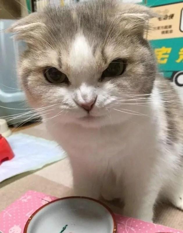 Осигурете на котето играчки, които спокойно да може да хапе