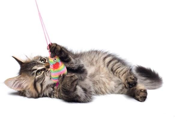 След като котката започне да слуша, чак тогава и? сипвате храна