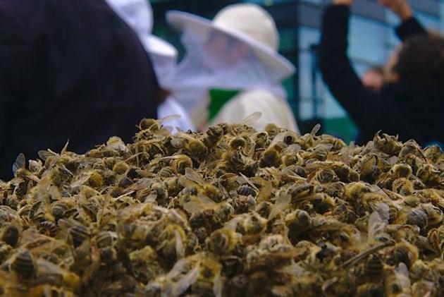 Основната причина за смъртта на тези пчели е използването на пестициди, съдържащи продукти, които са забранени в Европа, като неоникотиноиди и фипронил.