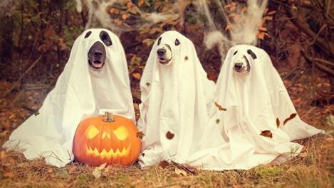 Защо чуваме и виждаме призраци