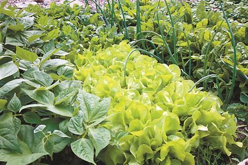 Растения помощници и съперници