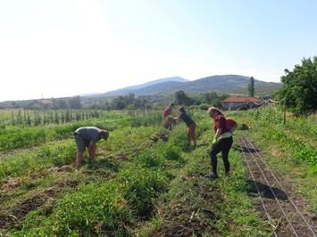 Зарзават носи достоен доход за млади на село