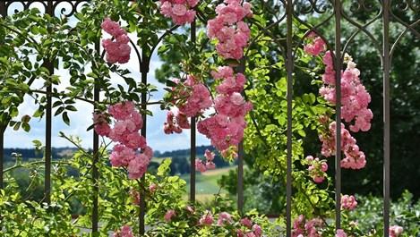 Декоративните решетки в градината и тяхната полза