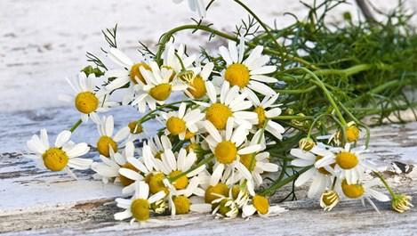 3 начина за лесно сушене на билки