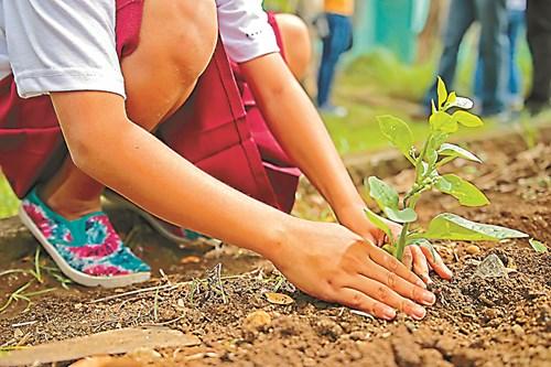 Красива градина с малко труд и пари