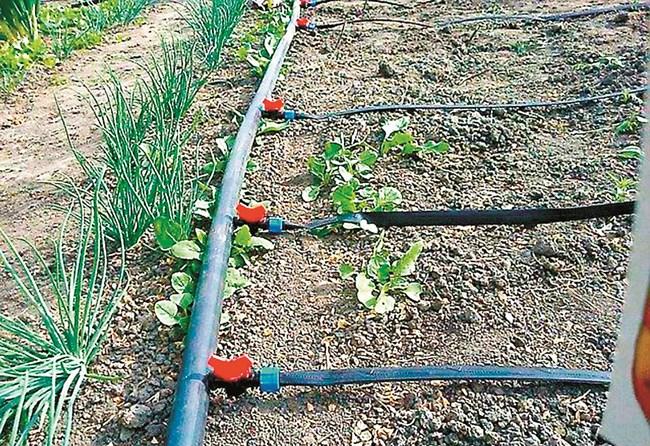 Предимствата на капковото поливане отдавна са доказани при всички видове култури в двора