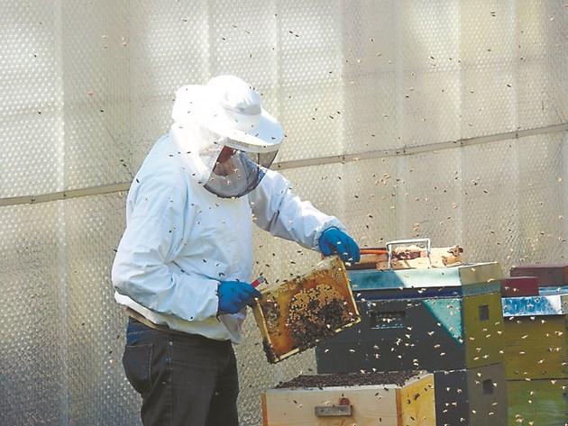 Пчелите се подготвят за зимуване, затова трябва да бъдат подпомогнати от пчеларя