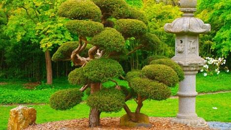 Мистерията на японските градини (галерия)