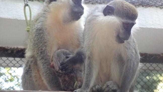 Ново бебе се роди във варненския зоопарк (СНИМКИ)